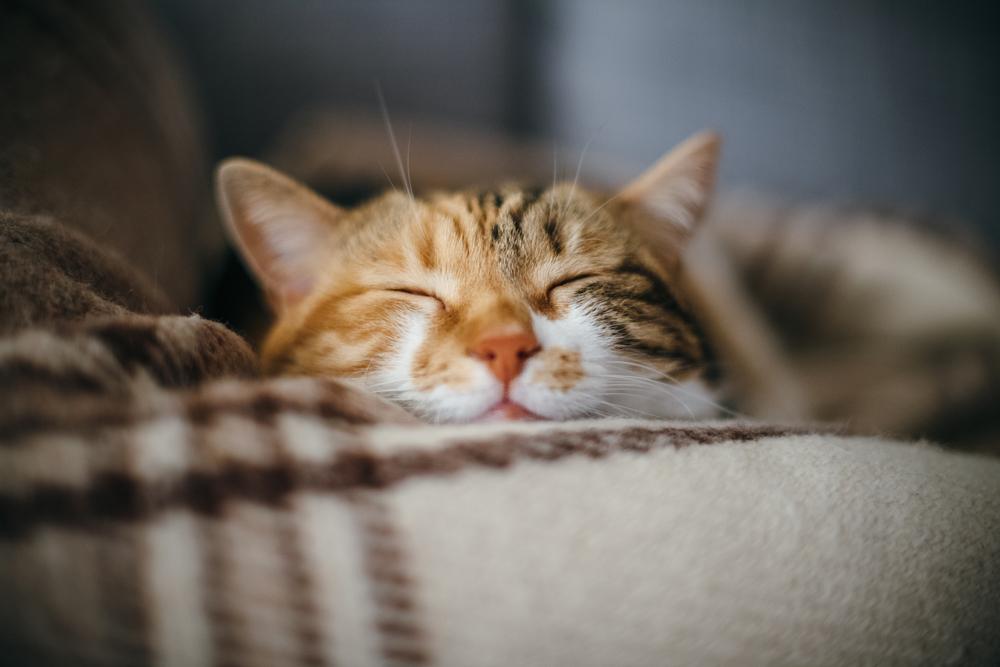 Happy_Sleeping_Cat