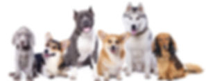 Dog_Pals.jpg