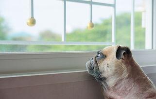 Dog_Waiting.jpg