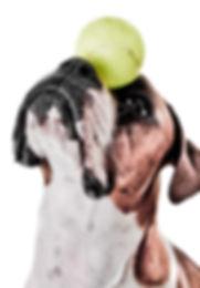 Dog_Tricks.jpg