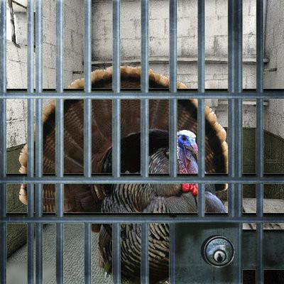 Matlock Bail Bonds Thanksgiving