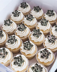 Sweet little succulent cupcakes to brigh