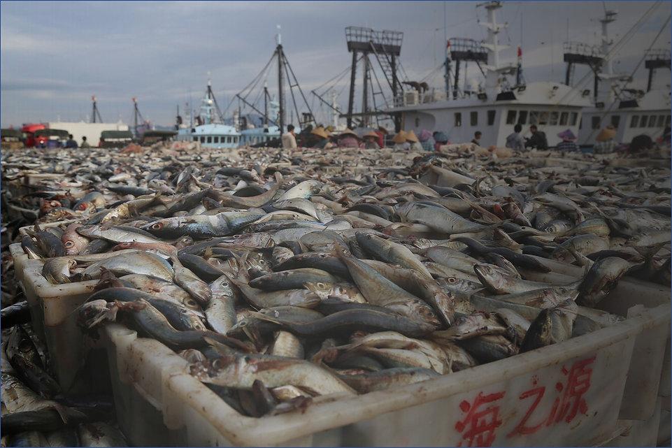 china-fish.jpg