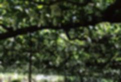 キウイバードさん畑写真.jpg