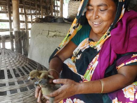 Sabina kan nu forsørge familien ved at opdrætte kyllinger