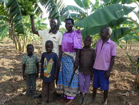 Organisk landbrugsmetode 10-dobler høsten i Uganda