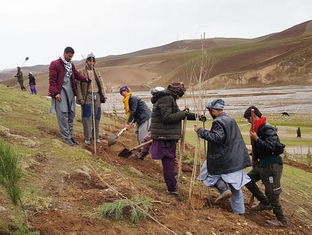 Træplantning afbøder klimakatastrofer