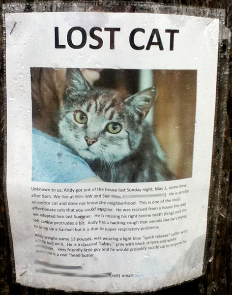 Lost my cat what to do