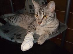 chat_bandage2