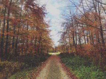 November!_._._._#dutchlandscapes #landsc