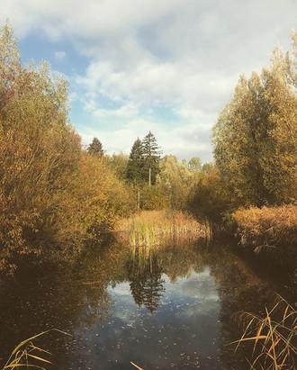 Colors of autumn... 🍂_._._._#dutchlands