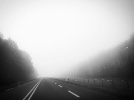 Mist_._._._#dutchlandscapes #landscapeph