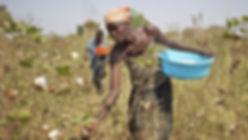 cotonea-news-bio-baumwolle-braucht-wenig