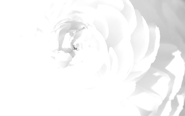 Flower%20background%20white_edited.jpg