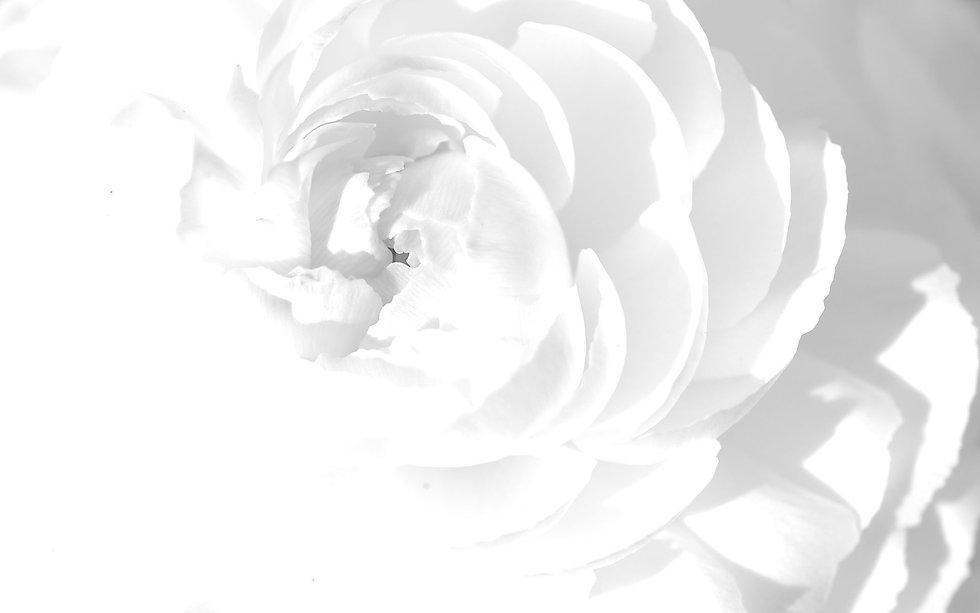 Flower background white.jpg