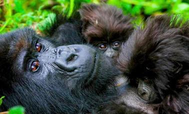 bapteme-gorille-rwanda.jpg
