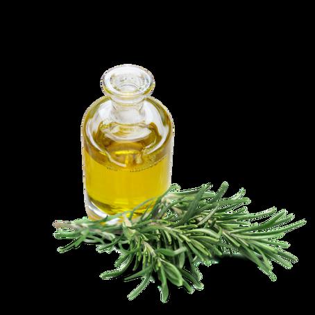 Óleo essencial de alecrim: o Minoxidil Natural