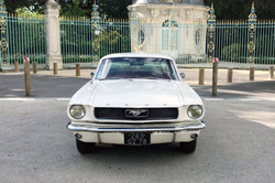 Mustang-Blanche-4