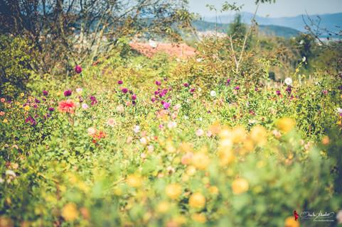 Vom Hügel | Herbstfest 2019