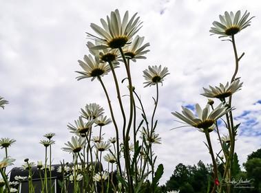 vom hügel - Bio-Blumen-Landwirtschaftsbetrieb - www.vomhuegel.at