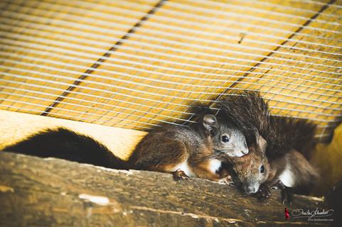 Verein für kleine Wildtiere in großer Not