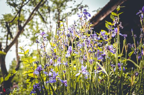 Rosengarten Krobotek   Eden Garten