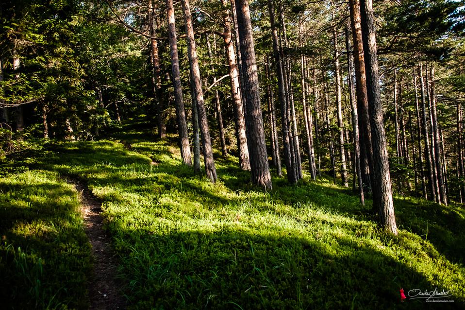 Natur - Landschaft Fotoreportage