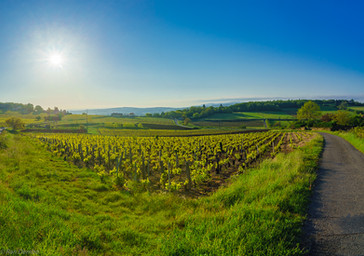 Sunrise view of vineyards and countryside in Beaujolais, France