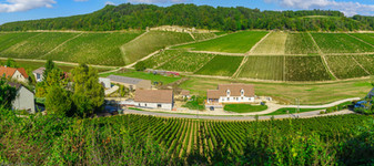 Countryside and vineyards in Chablis area, France