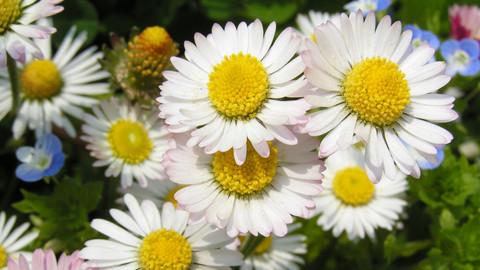Očista bylinkami - odľahčí telo, prečistí myseľ