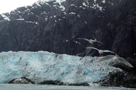 Iceberg Falling