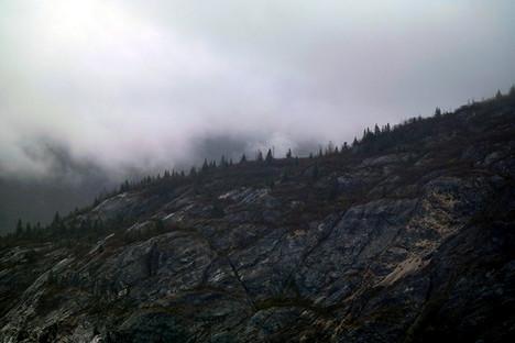 Treetop Fog