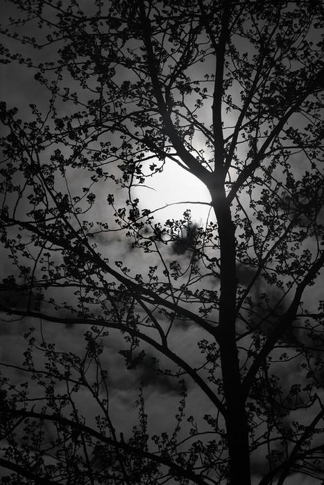 White Sun Black Tree