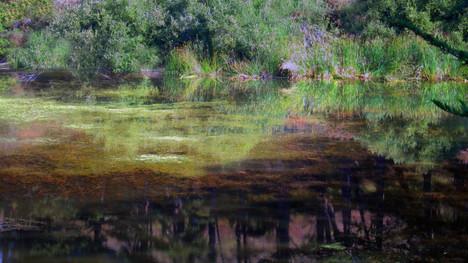 Impressionistic Pond