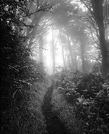 Narrow Path to Light