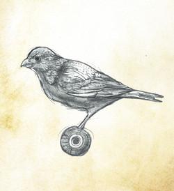 bird wheel