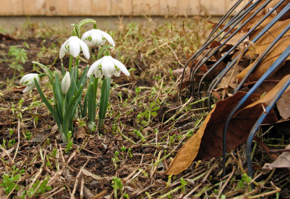 Spring Clean-up Estimate