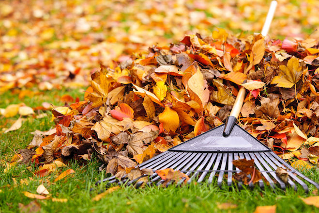 Fall Clean-up Estimate