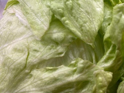 Lettuce- Iceberg Head