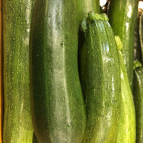 Squash- Green Zucchini
