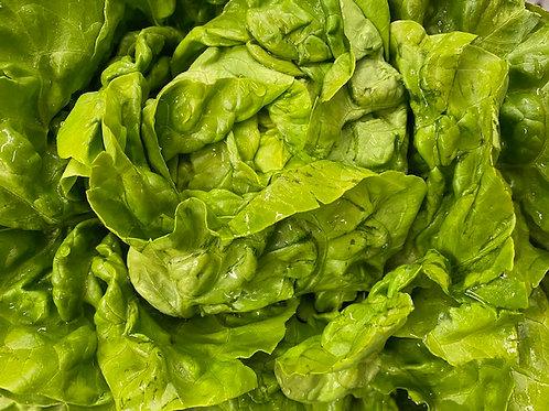 Lettuce- Boston