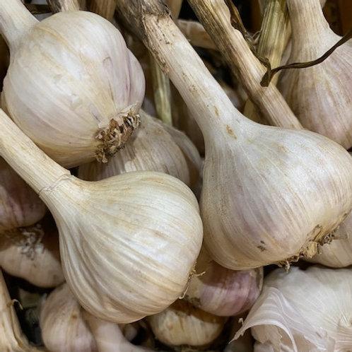 Garlic- Homegrown