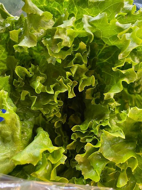 Lettuce- Green Leaf