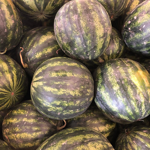 Watermelon- Seedless