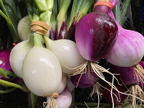 Onions- Our Own Bunches