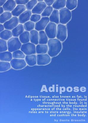 Adipose with caption.jpg