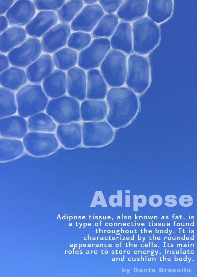 Adipose with caption.jpg