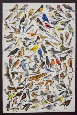 Birds of Windsor-Essex