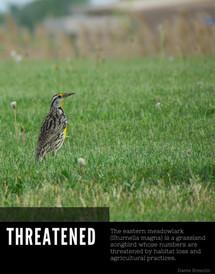 Invasive versus Threatened