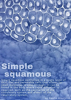 Simple squamous with caption.jpg